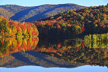 Peak New England foliage is mirrored in the water of Kent Pond in Killington, Vt.