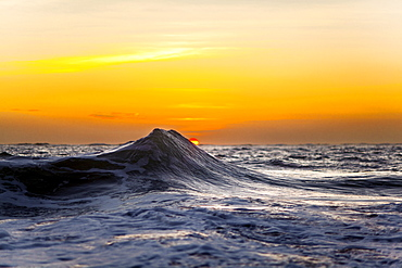 An ocean wave captured against a golden rising sun in Hawaii.