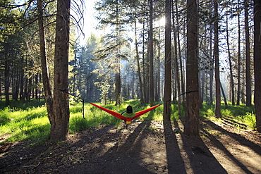 A hiker enjoys sitting in a hammock strung up in a set of pine trees.