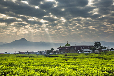 Sunlight streams through pocked clouds above a vast tea field with a small town and mosque and mountains on the horizon. Kerinci Valley, Sumatra, Indonesia