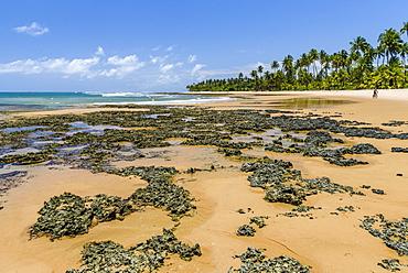 View of rocks on tropical beach during low tide in Praia da Bombaca, Barra Grande, South Bahia, Brazil