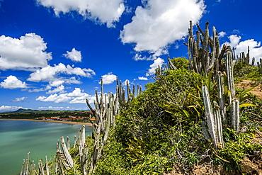 Cactus in restinga vegetation, Amacao de Buzios, Rio de Janeiro, Brazil