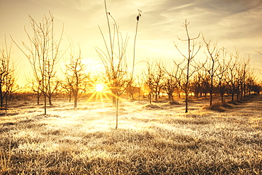 Sunrise in cold winter morning in the field near Kraljevo city, Serbia.  Sunrays going trough tree branches and reflects of the frost on grass.