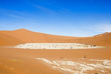 Beautiful scenery with dead trees in desert, Deadvlei, Sossusvlei, Namib Naukluft National Park, Namib Desert, Namibia