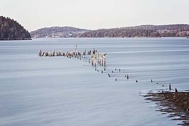 Photograph of pilings from old pier near coastline, Phippsburg, Maine, USA