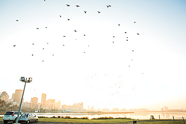 Flock of birds taking flight off Wilson's Wharf in Port of Durban with skyline of Durban, South Africa
