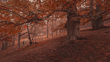 Scenic view of forest in autumn, Castanar de El Tiemblo, Avila, Castilla and Leon, Spain