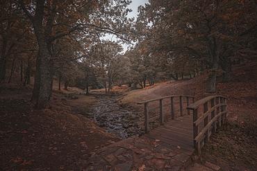 Scenic view of footbridge over stream in forest in autumn, Castanar de El Tiemblo, Avila, Castilla and Leon, Spain