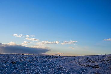 Scenic view of snow covered grassland, Plum Island, Parker River Wildlife Refuge, Newburyport, Massachusetts, USA
