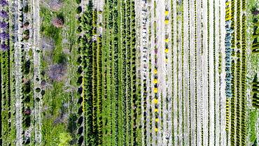 Aerial view of tree nursery, Genolier, Vaud Canton, Switzerland