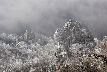 Scenic view of forest and rock formation in winter, Cheile Rametului, Alba County, Romania