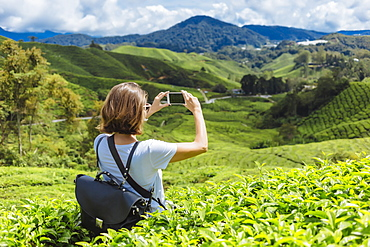 Rear view waist up shot of female tourist taking picture of tea plantations with smartphone, Cameron Highlands, Malaysia