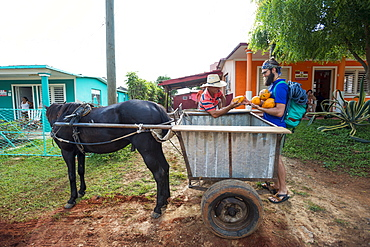 Two men loading fresh papayas on horse cart, Vinales, Pinar del Rio Province, Cuba