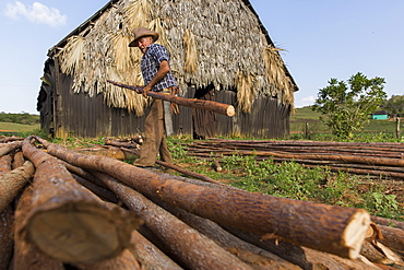 Farmer carrying log while working at farm, Vinales, Pinar del Rio Province, Cuba