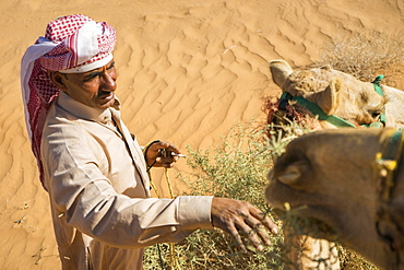 High angle view of man in Arabic clothing feeding camel in desert of Wadi Rum, Wadi Rum Village, Aqaba Governorate, Jordan