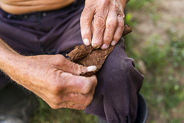 Mid section of man rolling cigar, Vinales, Pinar del Rio Province, Cuba