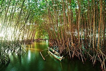 Canoe between mangrove Philippines trees at daytime, New Washington, Aklan, Philippines