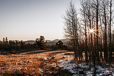 Autumn landscape with trees at sunrise, :Steamboat, Colorado, USA