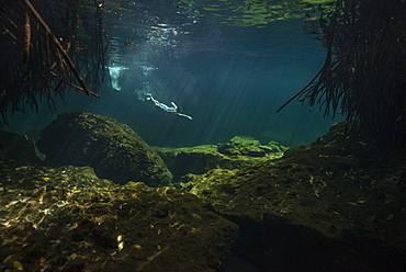 Distant view of single man freediving in?cenote in Riviera Maya, Quintana Roo, Mexico