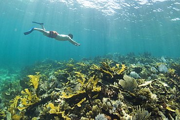 Side view of single man snorkeling in coral reef in Puerto Morelos, Quintana Roo, Mexico