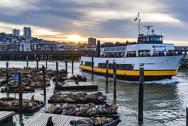 Sunset view of ship with tourists and sea lions in harbor, San Francisco, California, USA