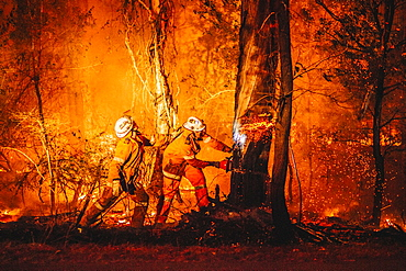 Firefighters remove a tree that is candling near the containment line of a grass fire, Pimpama, Queensland, Australia