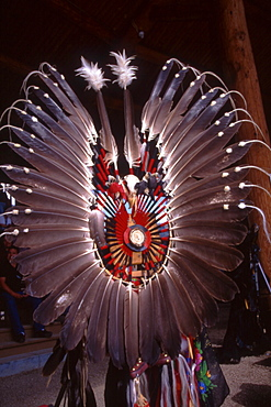 The feather bustle, a key element of men's traditional powwow regalia uses eagle feathers, a symbol of pride and honor among natives. The number of feathers are viewed as tokens of experience and wisdom associated with the one bearing them.