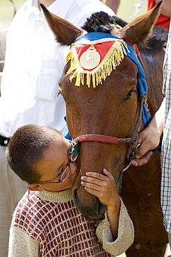 Winning horse, Terelj National Park, Mongolia