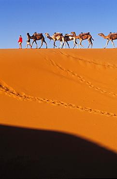 Camel Trekking, Erg Chebbi, Morocco