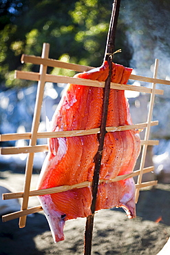 Salmon cooks in the native people style over an open flame.