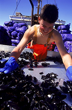 Off Mount Dessert Island Maine, 14 year old Derrick Beal works on a mussel dragger.