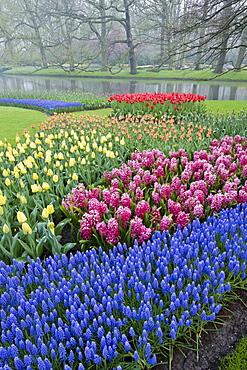 Morning mist and flowers in the Keukenhof Gardens, Lisse, Netherlands.