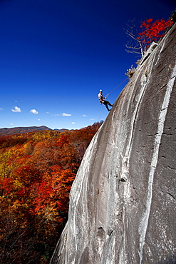 A man repelling descends a granite face surrounded by fall colors.