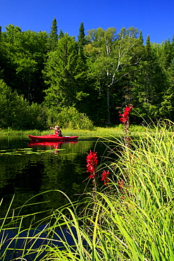 Kayaker in red boat on Big Brook,  Adirondack Park, NY, USA, with focus on grasses.