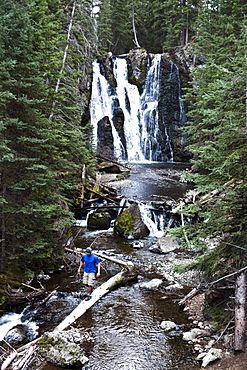 A athletic man hiking walks across a fallen log next to a waterfall near Bozeman, Montana.