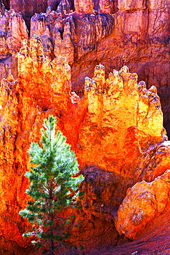 High angle scenic view of Bryce Canyon National Park.