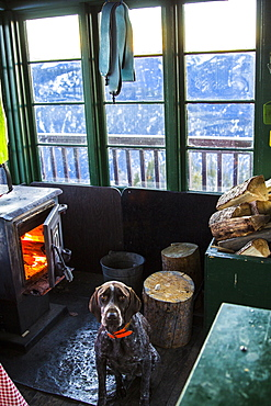 A German Shorthaired Pointer sits in front of a wood fire stove in an old fire lookout in Montana while skins dry out from a day of skiing.