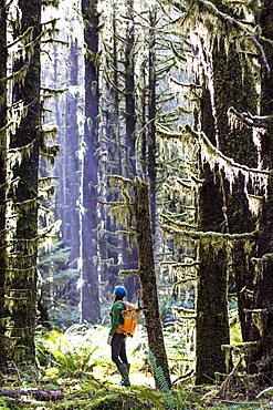 Woman takes a break from hiking to look up into the tall trees of the Hoh Rainforest, WA.