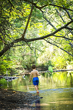 Toddler boy searches for pollywogs with net at creek in Bidwell Park, Chico, California.