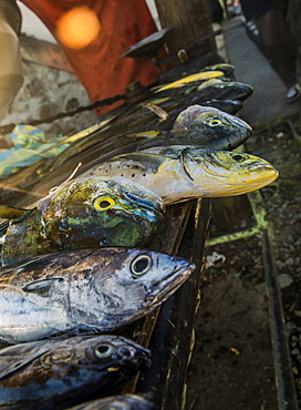 Fish lay on table in West coast of Dominica