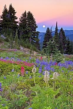 Mount Rainier Moonset, Mount Rainier Natoinal Park, WA