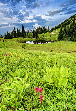 Mount Rainier at sunrise with pond and fresh spring wildflowers in foreground