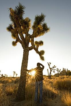 Sunrise Joshua Tree.