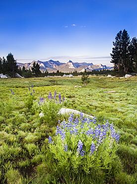 Cathedral Range at sunrise from Dog Lake Trail, Yosemite National Park