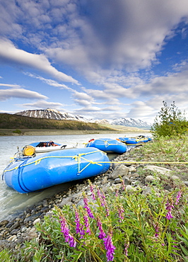 Rafts and wildflowers along the Alsek River