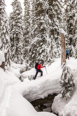Skier In The Snow Covered Forest In The Cascades Of Washington