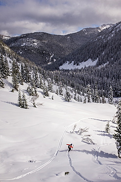 A Backcountry Skier In The Middle Of A Forest In The Cascades Of Washington