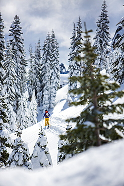 Rear View Of Person Skiing In Snowy Region In Lake Tahoe, California, USA
