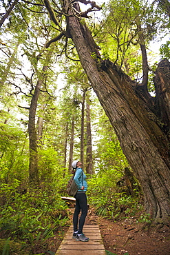 A Young Woman Looking At Large Cedar Tree While Hiking The Half Moon Bay Trail In Pacific Rim National Park