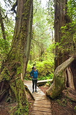 Hiking The Rainforest Trail In Pacific Rim National Park, British Columbia